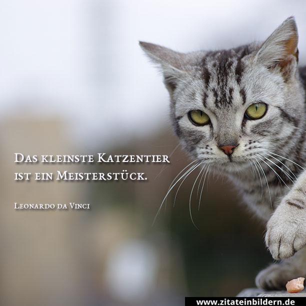Das kleinste Katzentier ist ein Meisterstück. (Leonardo da Vinci)